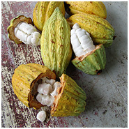 Cacao fruits split